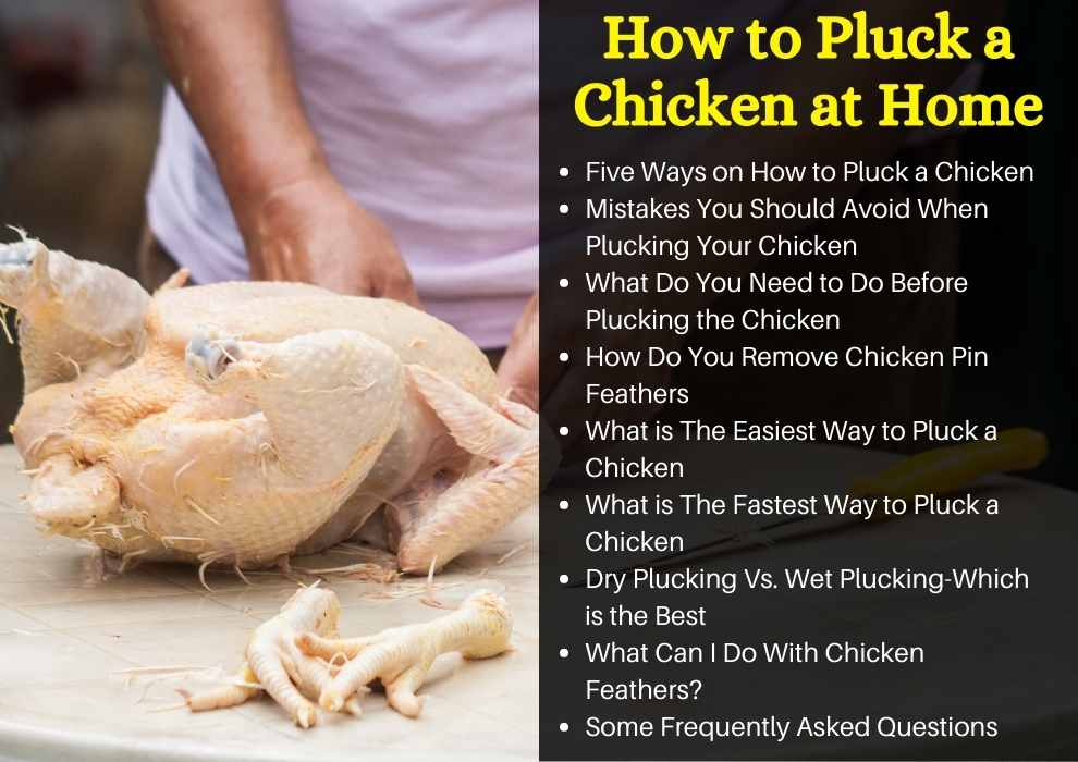 How to Pluck a Chicken